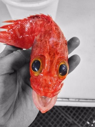 Derin denizlerden çıkan sıradışı balık türleri!