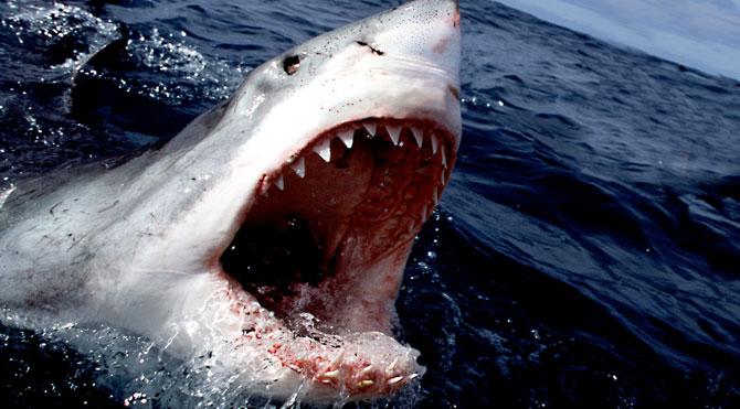 Köpek balığı turisti öldürdü!