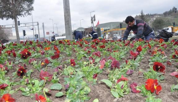 Lefkoşa'ya 60 bin çiçek