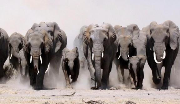 Öfkeli filler köyü bastı, 5 köylüyü öldürdü