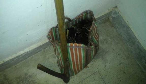 Pazar çantasından kesik kadın başı çıktı