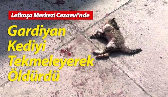 Gardiyan kediyi tekmeleyerek öldürdü