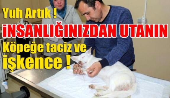 Köpeğe taciz ve işkence!