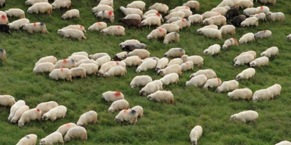 Hayvan üreticileri 25 Mayıs'ta eylem yapacak