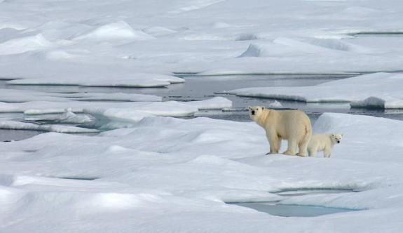 İklim değişikliği ile ilgili 6 korkutucu gerçek