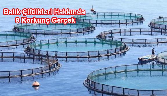 Balık Çiftlikleri Hakkında 9 Korkunç Gerçek