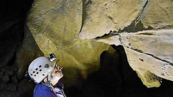 14 bin yıllık hayvan resimleri bulundu