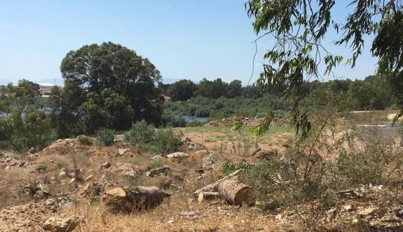 """""""Ayluga gölü kıyısındaki ağaçlar inşaat için yok ediliyor"""""""
