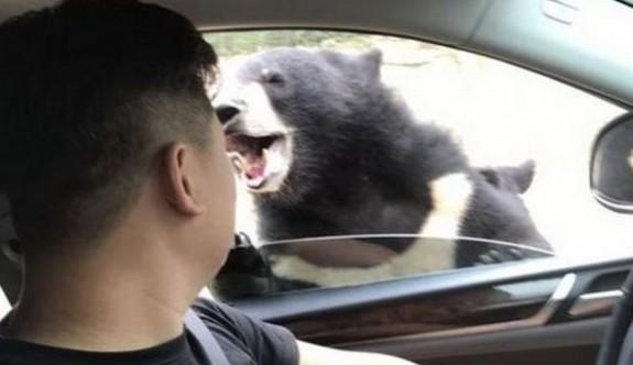 Arabasının camını kapatmak isterken açtı, ayı ısırdı