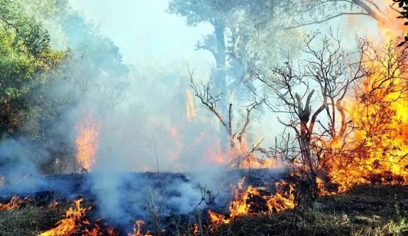 Büyükkonuk-Yedikonuk arasında büyük orman yangını