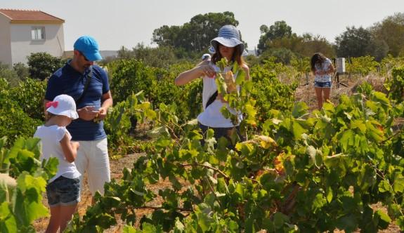 Turistler, bağlarda üzüm keyfi yaptı