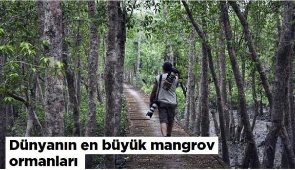 Dünyanın en büyük mangrov ormanı