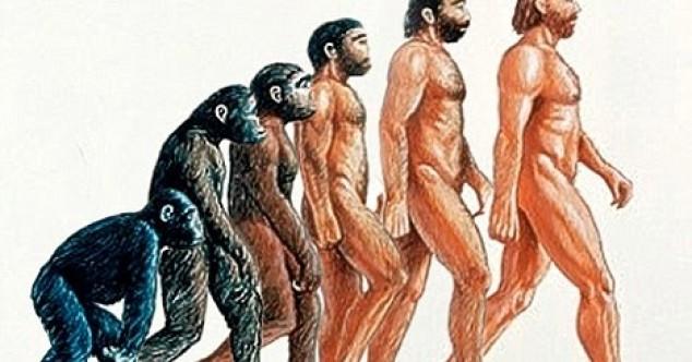 Evrimle Birlikte Körelmiş 16 Organ