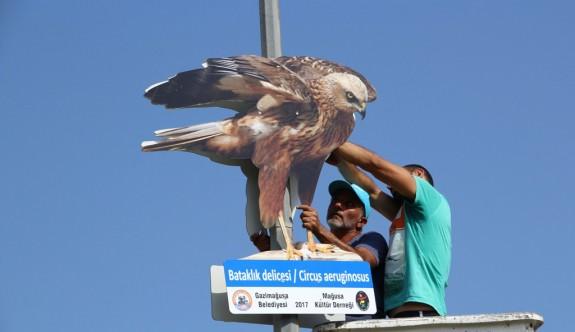 Mağusa Kıbrıs kuşları fotoğraflarıyla donatıldı
