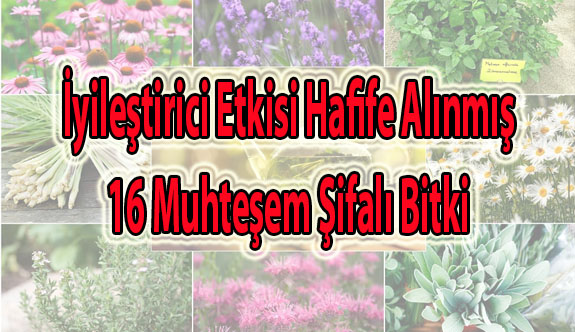 16 Muhteşem Şifalı Bitki
