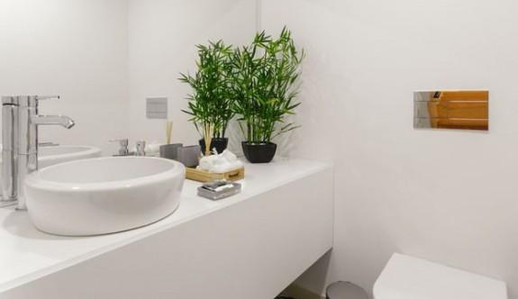 Banyo dekorasyonu için 5 bitki