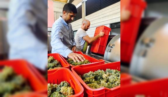 Etel Winery ilk bağ bozumunu kutluyor