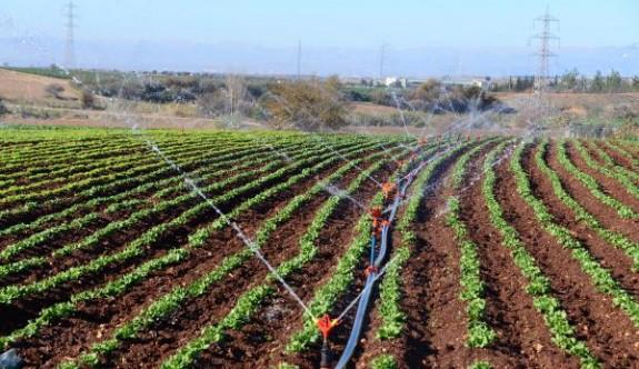 Sulu tarım can çekişiyor