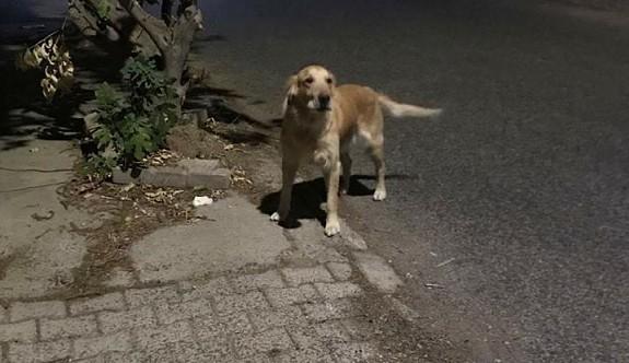 Bu köpek sahibini bekliyor