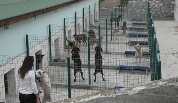 Hayvan Barınağı ve Rehabilitasyon Merkezi salı günü açılıyor