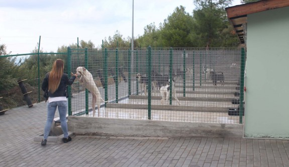 Karaman'daki Hayvan Barınağı ve Rehabilitasyon Merkezi hizmete açıldı