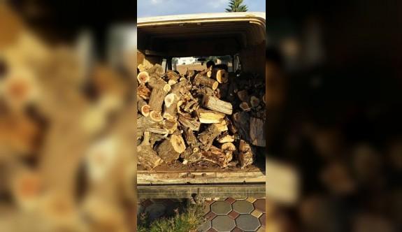 Sobalık odunlar nerden kesildi?