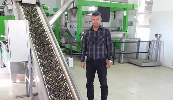 Zeytin üreticisi sıkıntılı