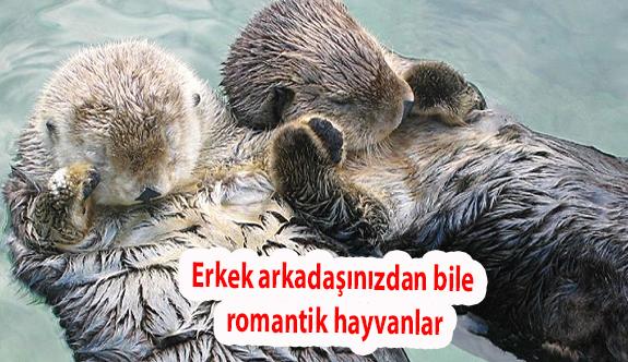 Erkek arkadaşınızdan bile daha romantik hayvanlar