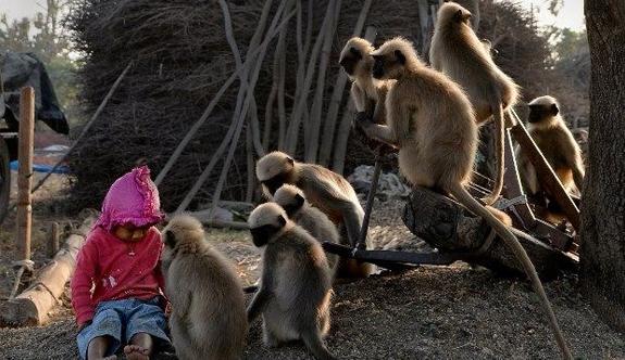 Samarth Bangari'nin hayvanlarla film gibi dostluğu