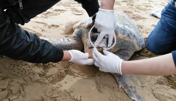 Bir caretta caretta daha balıkçı kancasının kurbanı