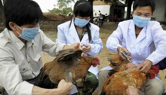 Güney Kore'de kuş gribi salgını