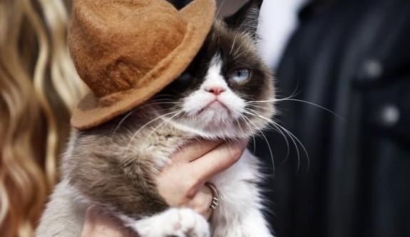 Huysuz Kedi sahibine 710 bin dolar kazandırdı