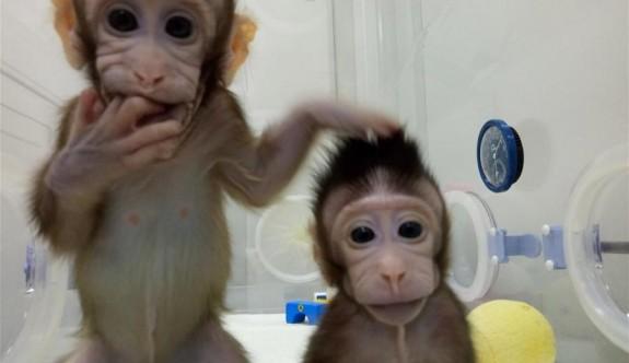 İlk kez maymun klonlandı