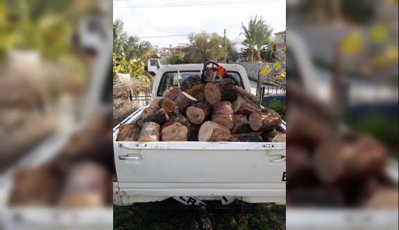 Ağaçlar şöminelere kurban edilmeye devam ediyor