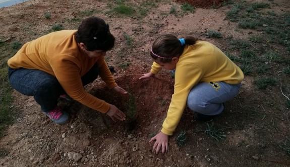Alevi Kültür Merkezi ağaç dikti