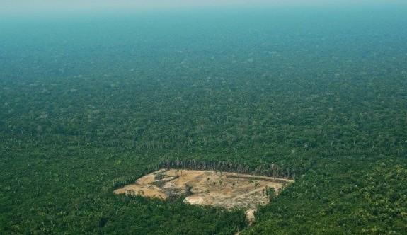 Amazonlarda 240 bin futbol sahası orman yok oldu