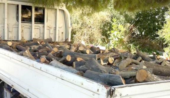 Kaçak ağaç kesimine caydırıcı ceza verilmeli