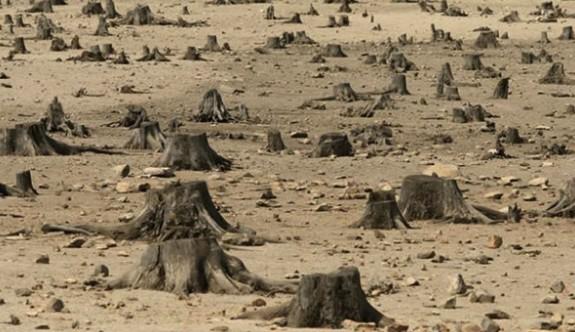 Orman Dairesi Personeli saldırıya uğruyor