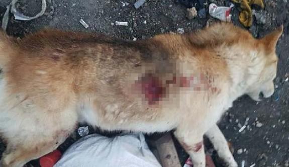Tüfekle köpeği öldüren sanığa iki bin lira para cezası