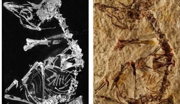127 milyon yıllık kuş fosili bulundu