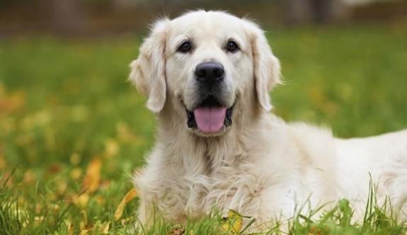 LTB'den köpek sahiplerine uyarı