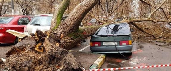 Moskova'da fırtına can aldı