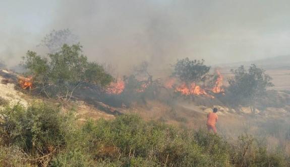 Gürpınar'da arazi yangını korkulu dakikalar yaşattı