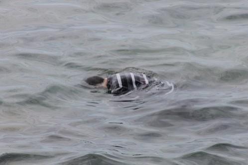 Karpaz bölgesinde denizde ceset sayısı artıyor