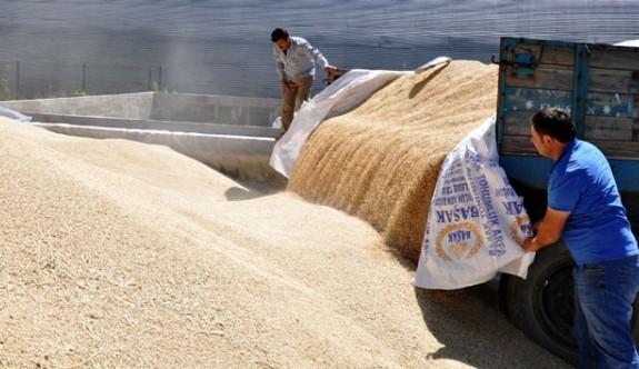 TÜK arpa, buğday ve tritikalenin alım fiyatlarını açıkladı