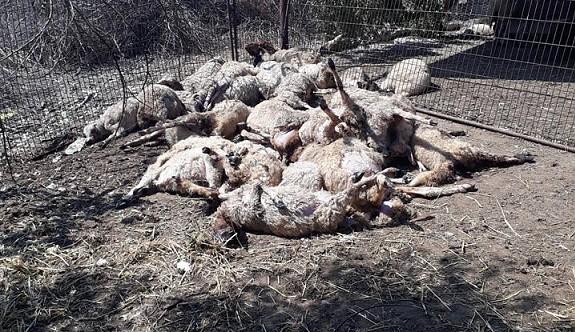 Yeni Erenköy bölgesinde başıboş köpekler perişan etti
