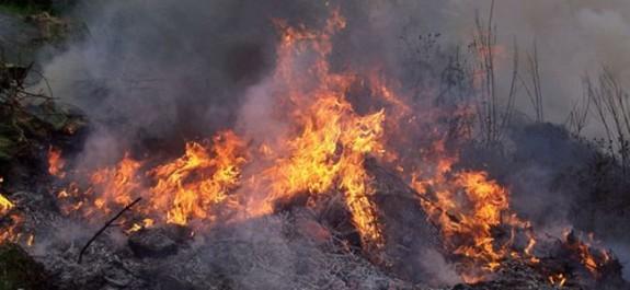 Yeşilırmak'ta 50 dönüm arazi ve onlarca ağaç kül oldu