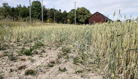 İsveç'te kuraklık alarmı