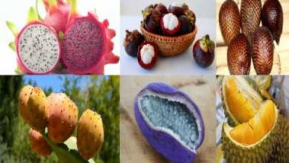 Kolay kolay bulamayacağınız 10 ilginç meyve