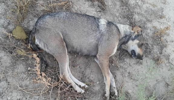 Komşu kavgasının cezasını köpekler çekti